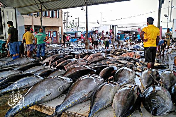 Toko Pusat Ikan Mujair Harga Relatif Murah kirim ke Pagedangan Tangerang