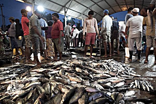 Penyedia Ikan Bandeng Berkualitas kirim ke Serpong Utara Tangerang