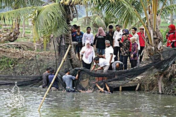 Distributor Ikan Gabus Harga Ekonomis kirim ke Menteng Jakarta