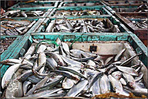 Pesan Ikan Mas Harga Relatif Murah kirim ke Pangatikan Garut