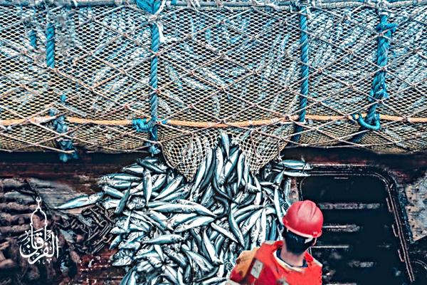 Supplier Ikan Gurame Harga Hemat kirim ke Pela Mampang Jakarta