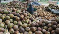 Permalink ke Toko Pusat Buah Kelapa Kirim ke Jayanti Tangerang [Terpercaya]