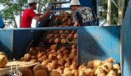 Permalink ke Toko Pusat Kelapa Tua Kirim ke Karang Tanjung Pandeglang [Berkualitas]